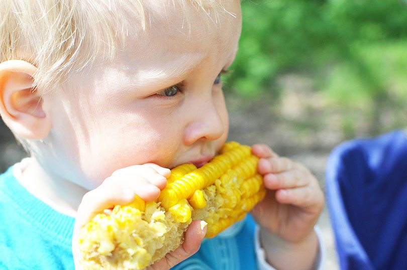 Child eating a cob of corn.